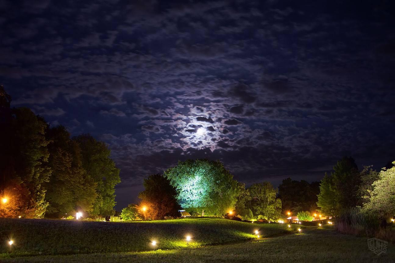 A lavori conclusi decide così, di sua spontanea volontà, di fare una  sorpresa alla donna disponendo durante la notte alcune piante e pietre nel giardino  di