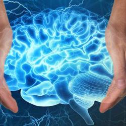 Il cervello umano accolto tra due mani.